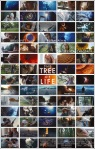 kt-tree-of-life-poster